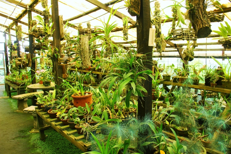Vast amount of Orchids!