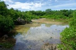 Ecosystems in Bongoyo